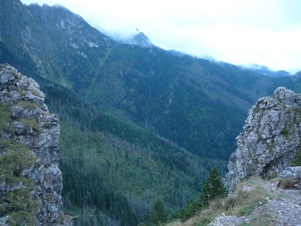 """Widok z Sarniej Skały. W dole widać połać lasu regenerującą się pośród wymarłych uprzednio świerków. Suche drzewa tworzą swego rodzaju """"fundament"""" dla nowo odradzającego się bez pomocy człowieka lasu. Jest to strefa ochrony ścisłej Tatrzańskiego PN."""