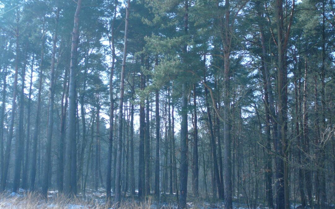 Sytuacja lasów ochronnych pod Warszawą na przykładzie Lasów Okuniewsko-Rembertowskich