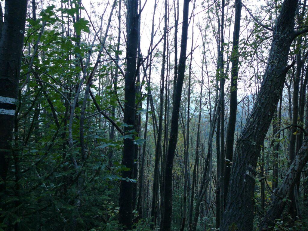 Jest to strefa ochrony ścisłej TPN na wschód od Sarniej Skały. Widać tu już dobrze wyrośnięty las jaworowy, który bez pomocy człowieka zregenerował połać po dawnym lesie świerkowym, prawdopodobnie położonym przez wiatr halny.