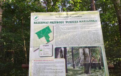 Czas na las dla biednych to też luksus.                      Rozmyślania po wizycie w  Puszczy Mariańskiej